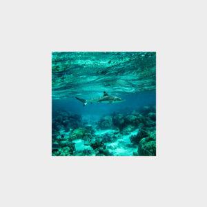 Marina Vernicos Shark Pocket Square Scarf